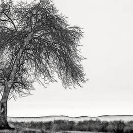 Don Johnson - Artistic Black and White Sunset Tree