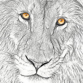 Don Johnson - Artistic Lion Face #2