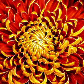 Don Johnson - Artistic Orange and Yellow Mum