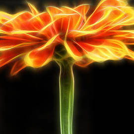 Don Johnson - Artistic Orange Flower Profile