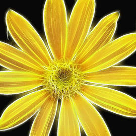 Don Johnson - Artistic Yellow Daisy