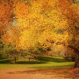 As The Leaves Fall by Kim Hojnacki