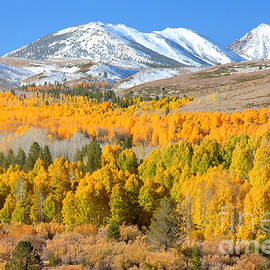 Aspen Panorama by Frank Townsley