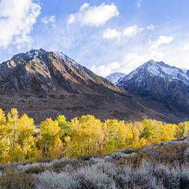 Aspens Aglow In The Eastern Sierra  by Priya Ghose