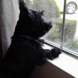At the Window by Diane Ferguson