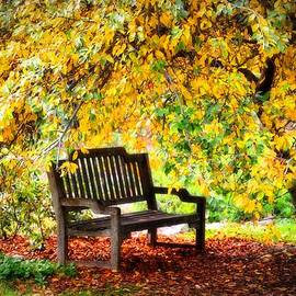 Lynn Bauer - Autumn Bench in the Garden