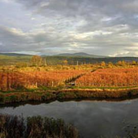 Autumn Cranberry Farming - Maple Ridge, British Columbia by Ian Mcadie