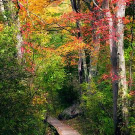 Autumn Boardwalk by Bill Wakeley