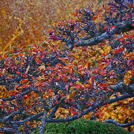 First Star Art - Autumn Branches by jrr