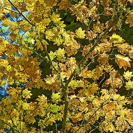 Nick  Boren - Autumn Color