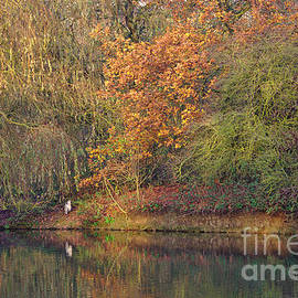 Autumn Colours And Heron by Jeremy Hayden