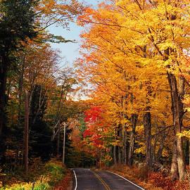 Joann Vitali - Autumn Country Road