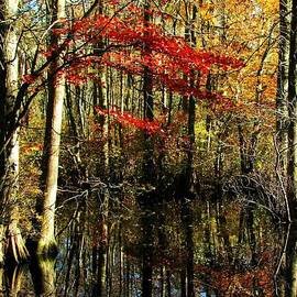 Barbara Jernigan - Autumn Creek