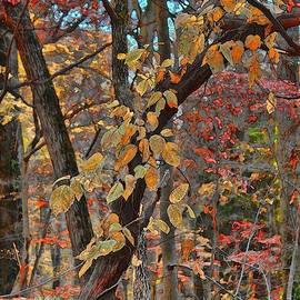 Jeff Breiman - Autumn Day