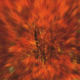 Kellice Swaggerty - Burst of Autumn