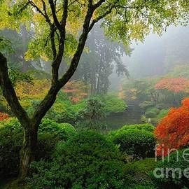 Foggy Autumn Morning at Portland Japanese Garden by Tom Schwabel