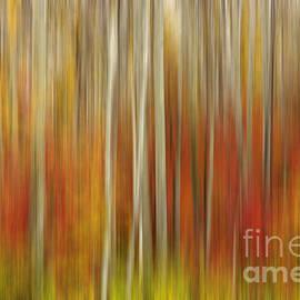 Beve Brown-Clark Photography - Autumn Glory