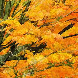 Autumn Gold 2 by Allen Beatty