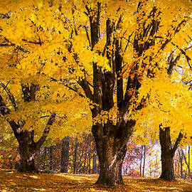 Autumn Golds by Debra and Dave Vanderlaan