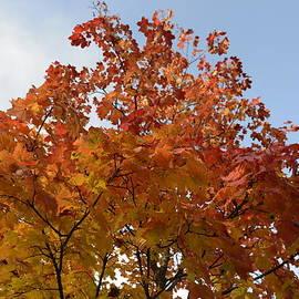 Autumn Harmony 1 by Teo SITCHET-KANDA