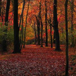 Raymond Salani III - Autumn III
