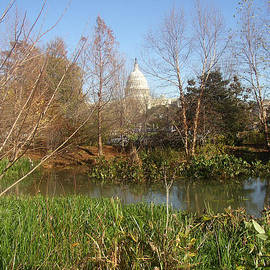 Nancy Worrell - Autumn in Washington DC
