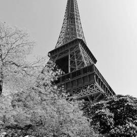 Eiffel Tower by David Lobos