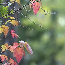 Mark McKinney - Autumn Ivy 2