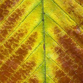 Colin Woods - Autumn Leaf