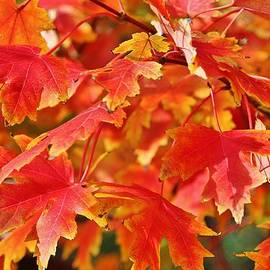 Cynthia Guinn - Autumn Leaves