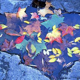 Autumn Leaves Hot Springs National Park