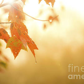 Autumn Leaves in the Rain by Diane Diederich