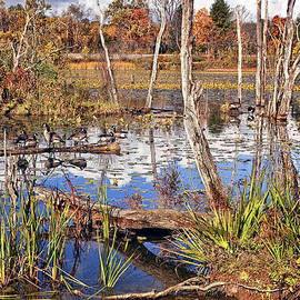 Autumn Morning at the Marsh by Marcia Colelli