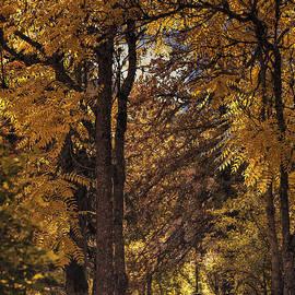 Diane Schuster - Autumn Nocturne
