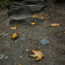 Priya Ghose - Autumn Path