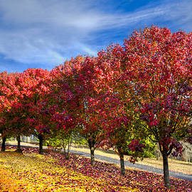Debra and Dave Vanderlaan - Autumn Pear Trees
