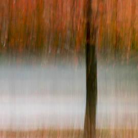 Terry DeLuco - Autumn Rain