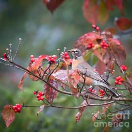 Autumn Robin  by Kerri Farley
