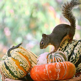 Autumn Still Life with Squirrel