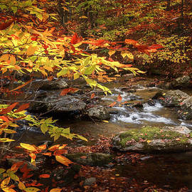 Bill Wakeley - Autumn Stream