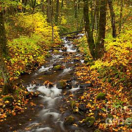 Mike  Dawson - Autumn Stream