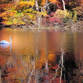 Autumn Swan by Jim DeLillo