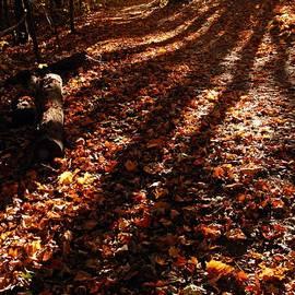 Larry Ricker - Autumn Trail