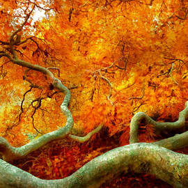 Mike Savad - Autumn - Tree - Serpentine