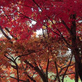 Autumn Trees by Michele Avanti
