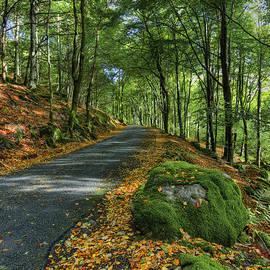 Ian Mitchell - Autumn Walk