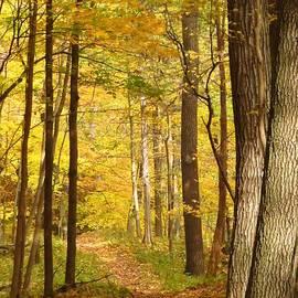 Lori Frisch - Autumn Walk in the Park