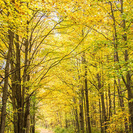 Autumn Yellow Trail by Cheryl Baxter