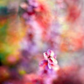 Autumnal Berberis 2 by Tomasz Dziubinski