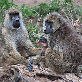 Beth Wolff - Baboon family